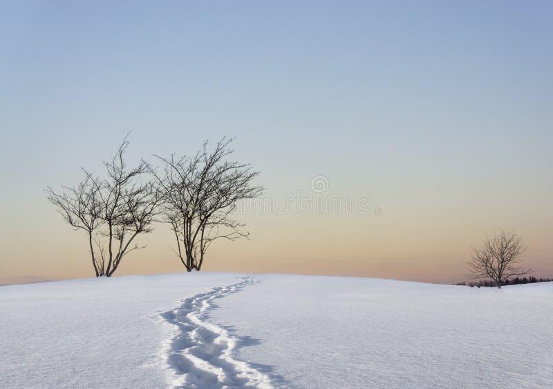 Чуть-чуть деревья в ландшафте зимы стоковые изображения rf