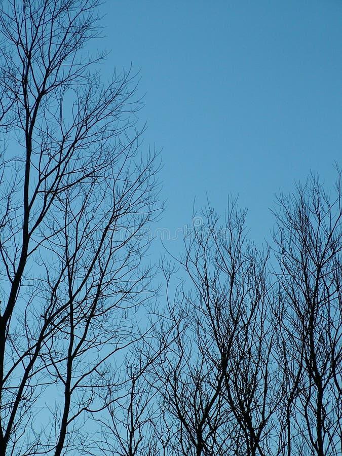 Download чуть-чуть зима валов стоковое фото. изображение насчитывающей сумрак - 81920