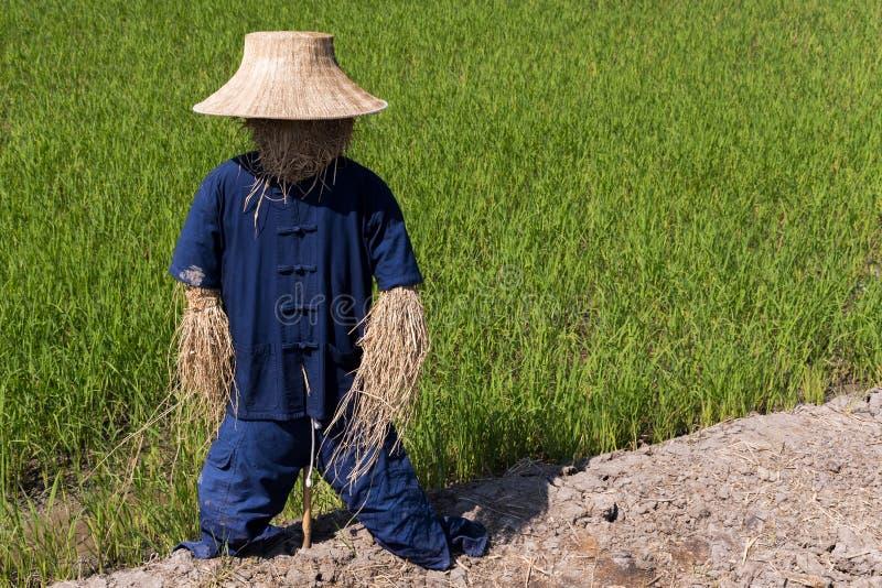 Чучело в тайской форме фермера стоя outdoors в соломенном чучеле полей сде стоковое изображение