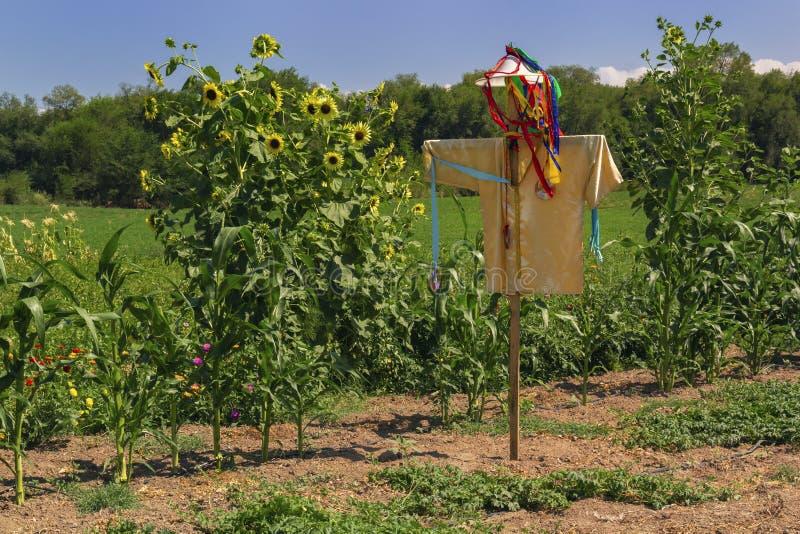 Чучело стоит на поле солнцецвета на солнечный день против неба стоковое изображение