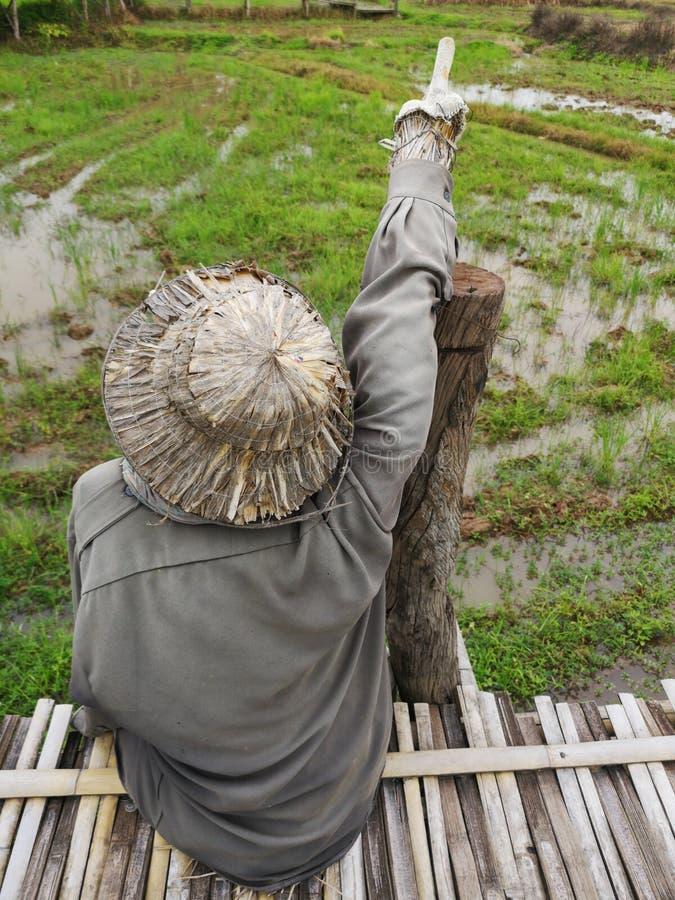 Чучело с посадочными местами соломенной шляпы на бамбуковом мосте перед полем и пальцем указывать на небо стоковые изображения rf
