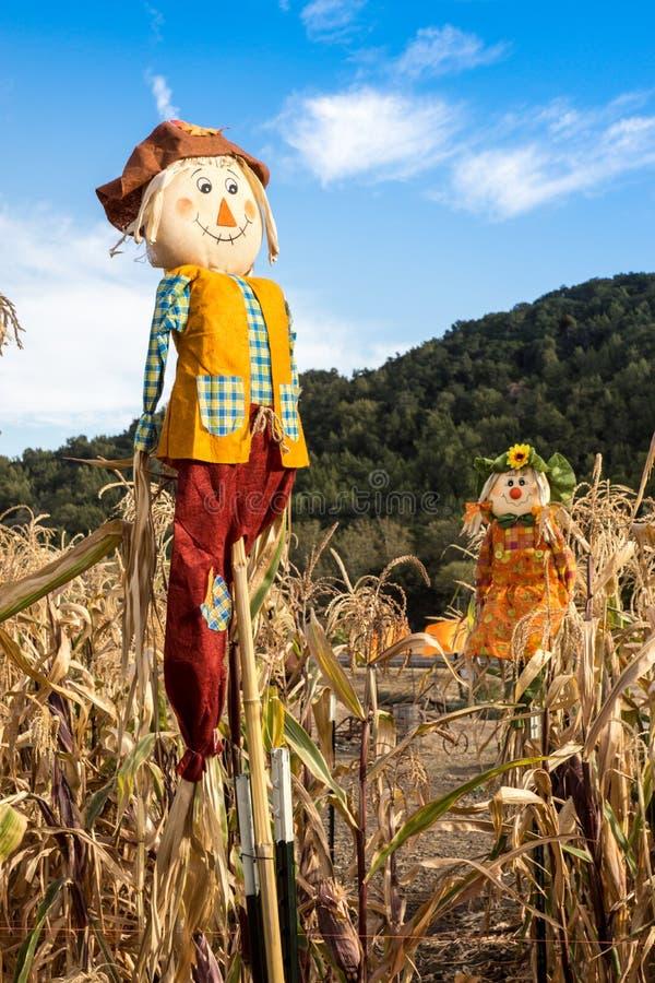 Чучела в кукурузном поле стоковая фотография