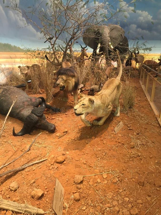 Чучела в Техасе стоковое фото rf