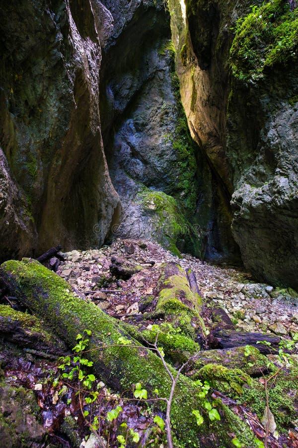 Чудесное ущелье Sighistel стоковая фотография rf