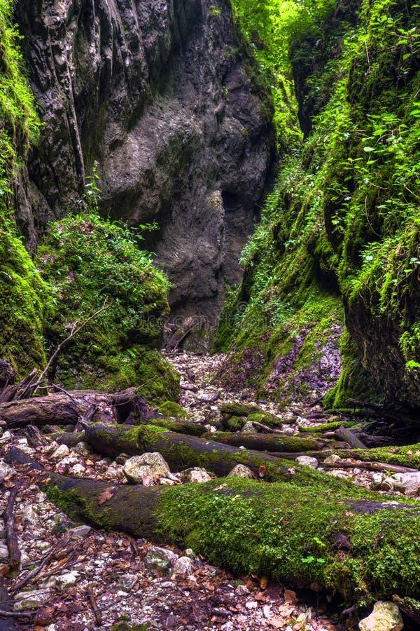 Чудесное ущелье Sighistel стоковое изображение rf