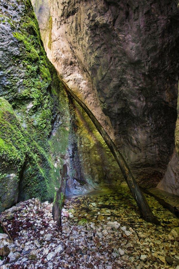 Чудесное ущелье Sighistel стоковое фото