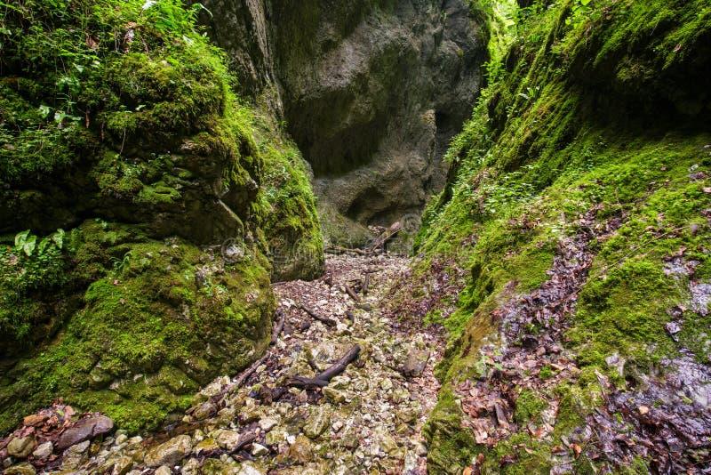 Чудесное ущелье Sighistel стоковое изображение