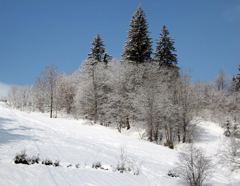 Чудесный ландшафт #2 зимы стоковое фото