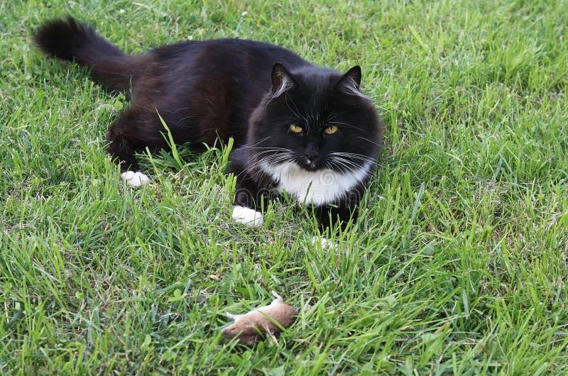 Чёрная кошка с мышкой стоковая фотография rf