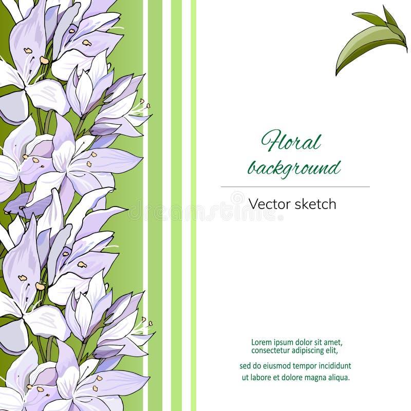 Шаблон вектора для текста с цветочным узором Белые и пурпурные цветки на зеленой предпосылке Для представления, плакаты, плакаты бесплатная иллюстрация