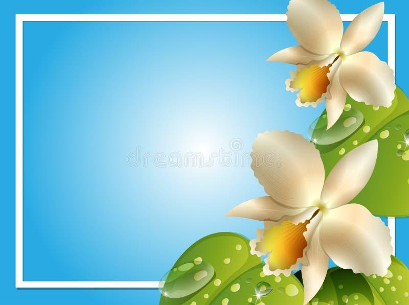 Шаблон границы с белыми орхидеями иллюстрация вектора