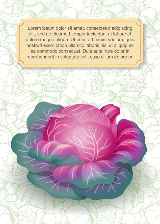 Шаблон дизайна карты с пурпурной капустой на предпосылке с овощами плана иллюстрация вектора