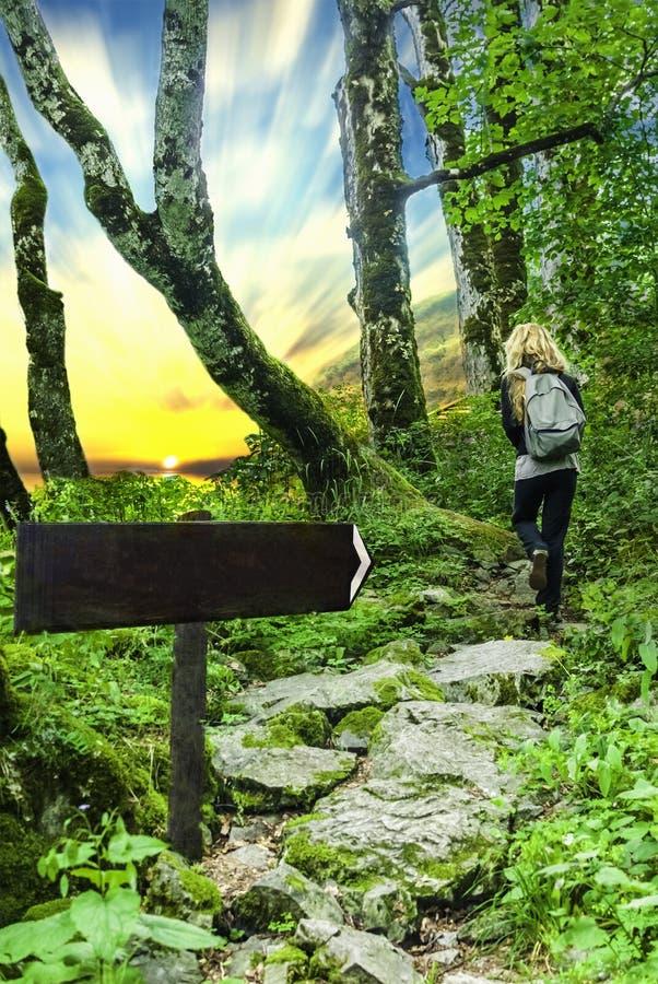 Шаблон, пробел Arrowed деревянное подписывает внутри лес с человеком и заходом солнца стоковая фотография rf