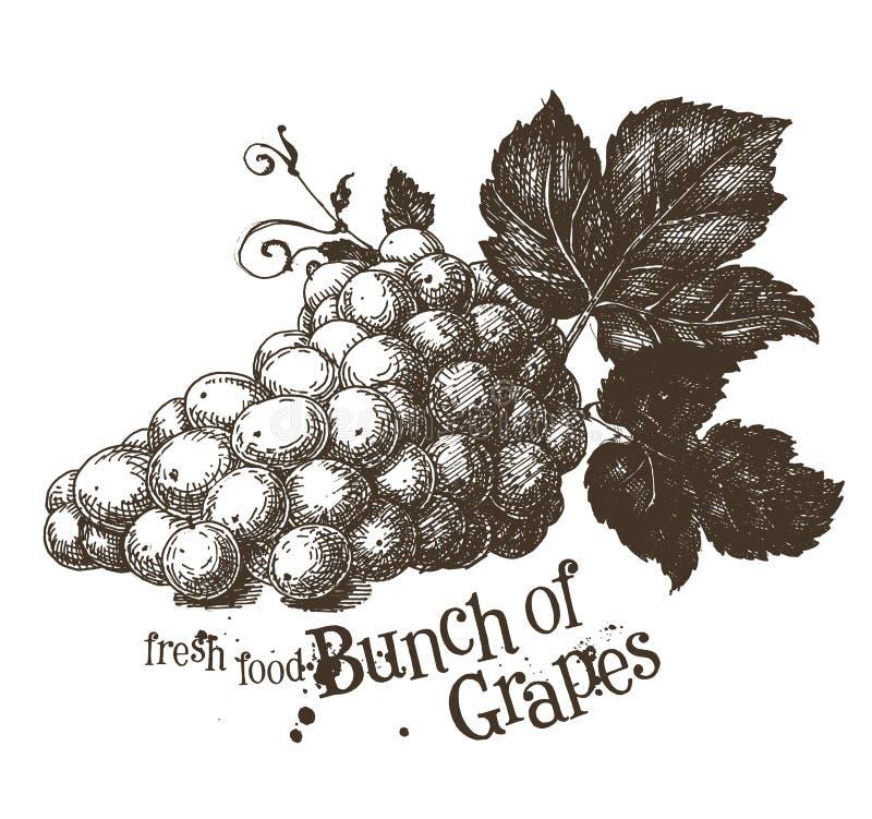 Шаблон дизайна логотипа вектора виноградного вина лоза или иллюстрация вектора