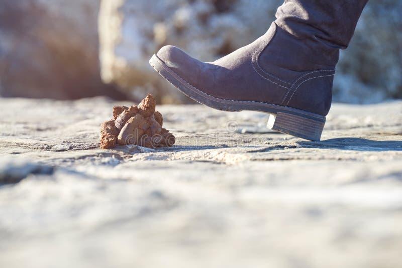 Шагать в гречиху собаки стоковое изображение