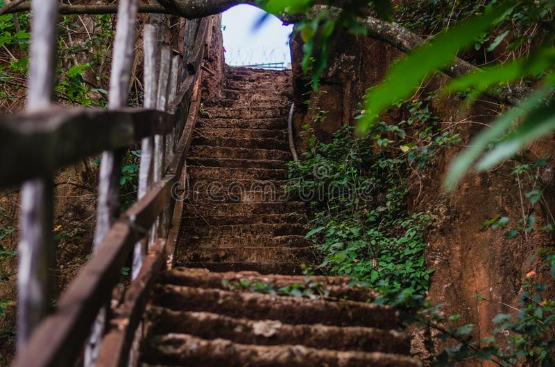 Шаги в лес водя вверх рядом со стеной утеса стоковые изображения