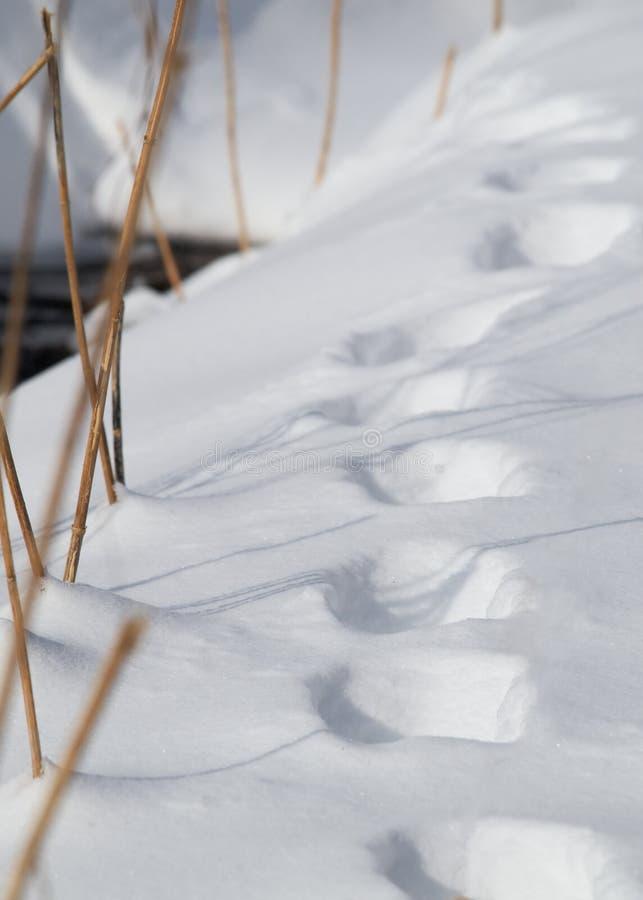 Шаги в снеге стоковые изображения