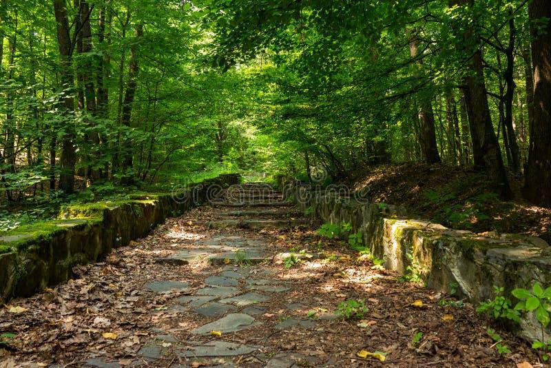Шаги замотки каменные с листвой горизонтальной стоковое фото