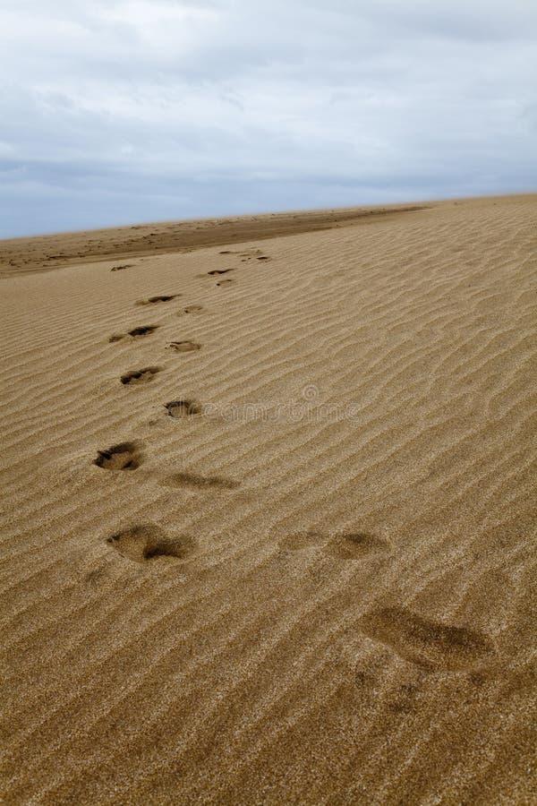 Шаги на дюне около виллы Gesell стоковые изображения rf