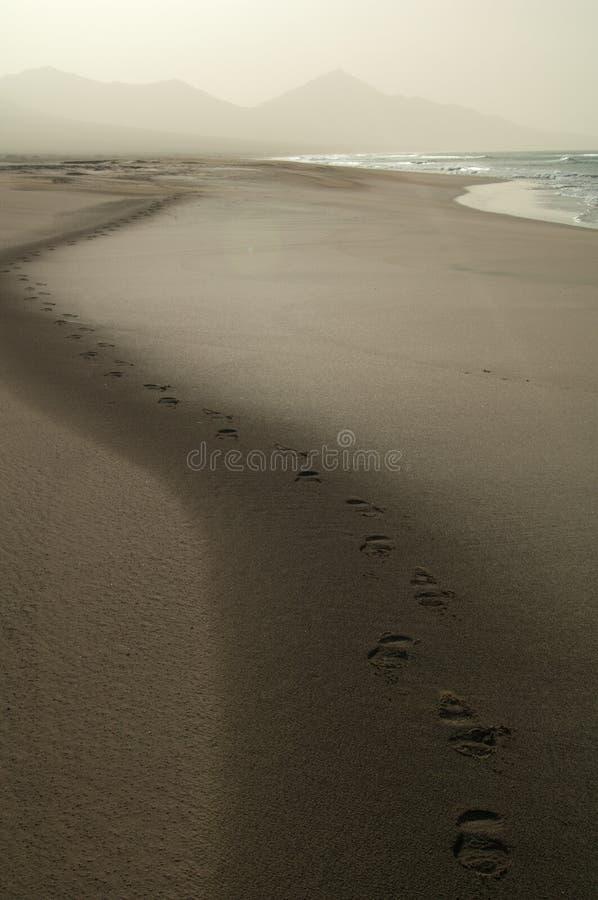 Шаги на пляже стоковое фото