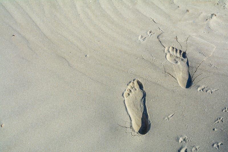 Шаги на пляже морем в лете Горизонтальный взгляд  стоковое изображение rf