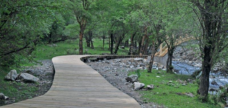 Шаги, шаги, Forest Park, лес, деревья, древесины, растительность, пейзаж, предпосылка, туризм, графство huzhu Китая, Цинхая, расс стоковые фотографии rf