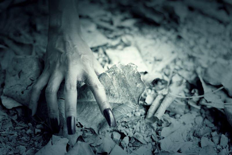 Шаг руки женщины на пол с сухими лист стоковое изображение rf