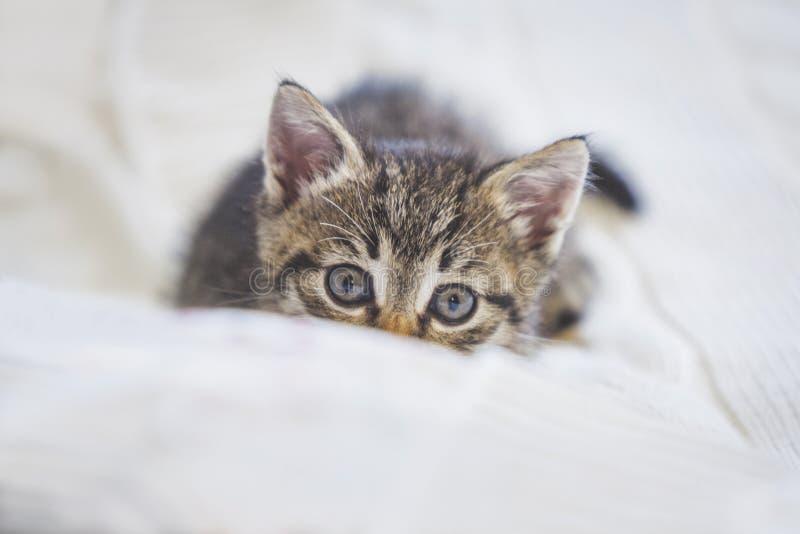 Шаловливое милое скрывание котенка tabby стоковое изображение