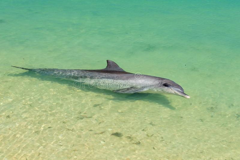 Шаловливый дельфин - обезьяна Mia стоковое изображение