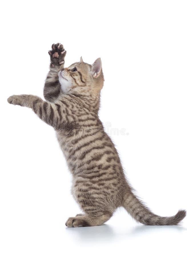 Картинка котенок стоит на задних лапках