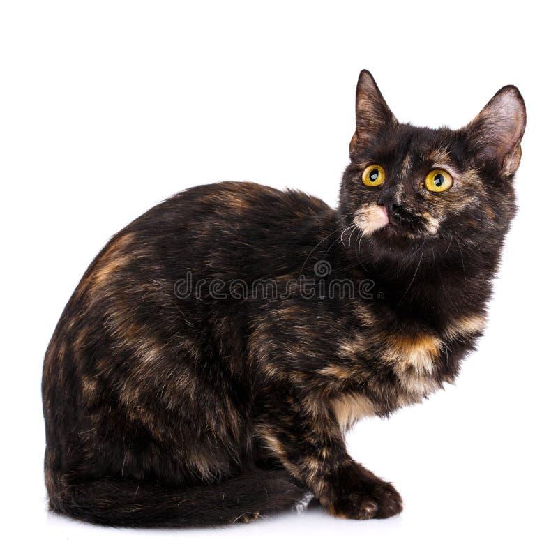 Шаловливый, пушистый котенок смотря вверх crayons Валентайн сердец s рук женщины 4 дня стоковое изображение rf