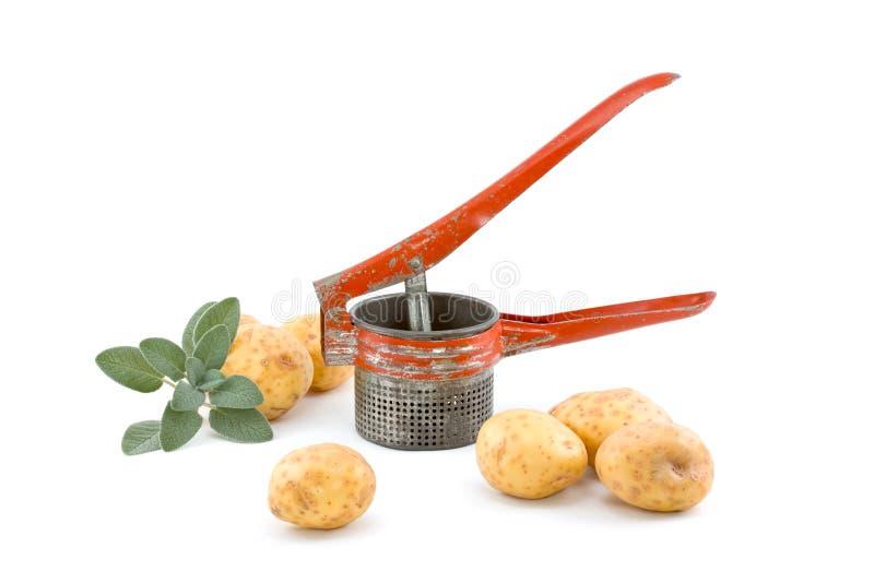 шалфей ricer картошек стоковое фото rf