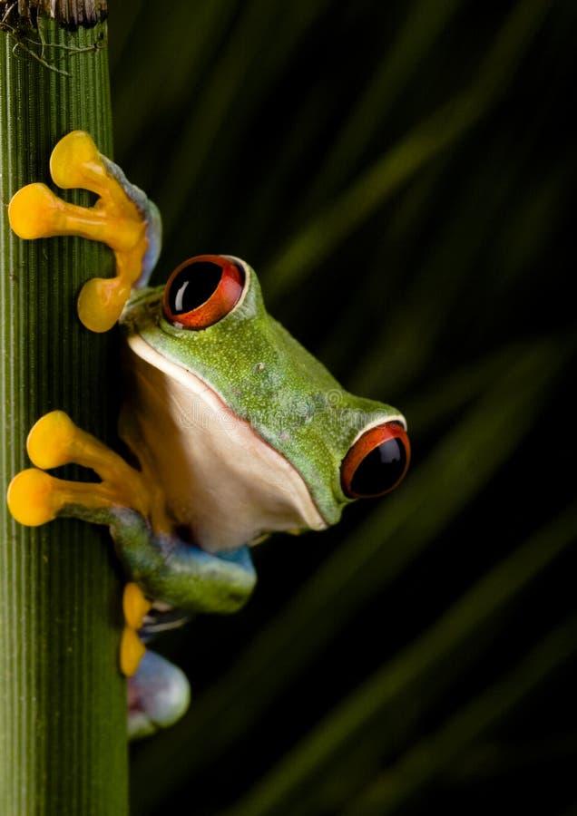 шальная лягушка стоковое изображение rf
