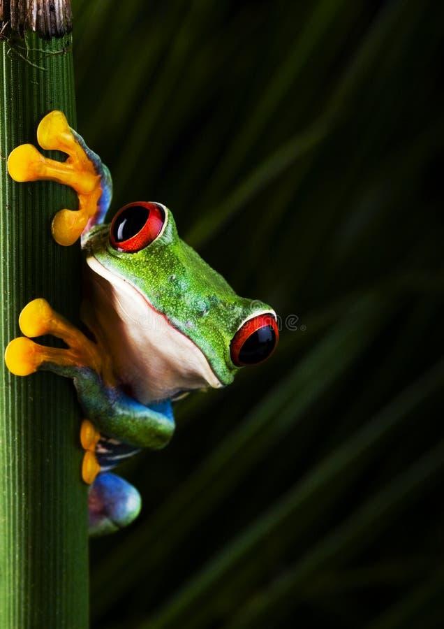 шальная лягушка стоковые фото
