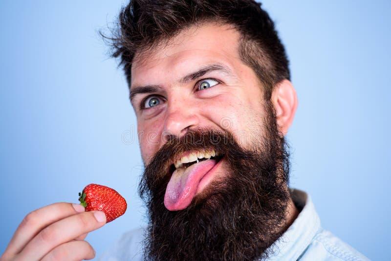 Шальной о клубнике Укомплектуйте личным составом красивый битника с длинной бородой есть клубнику Битник наслаждается сочной зрел стоковые фотографии rf