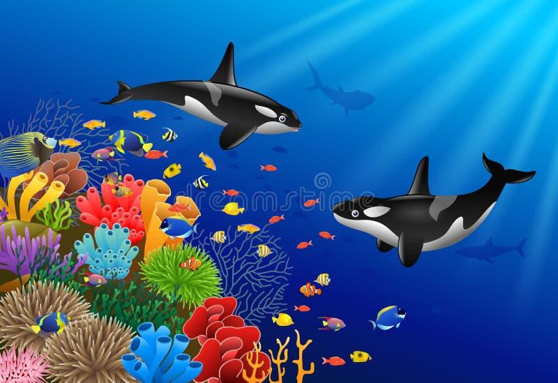 Шарж дельфин-касаток с underwater бесплатная иллюстрация