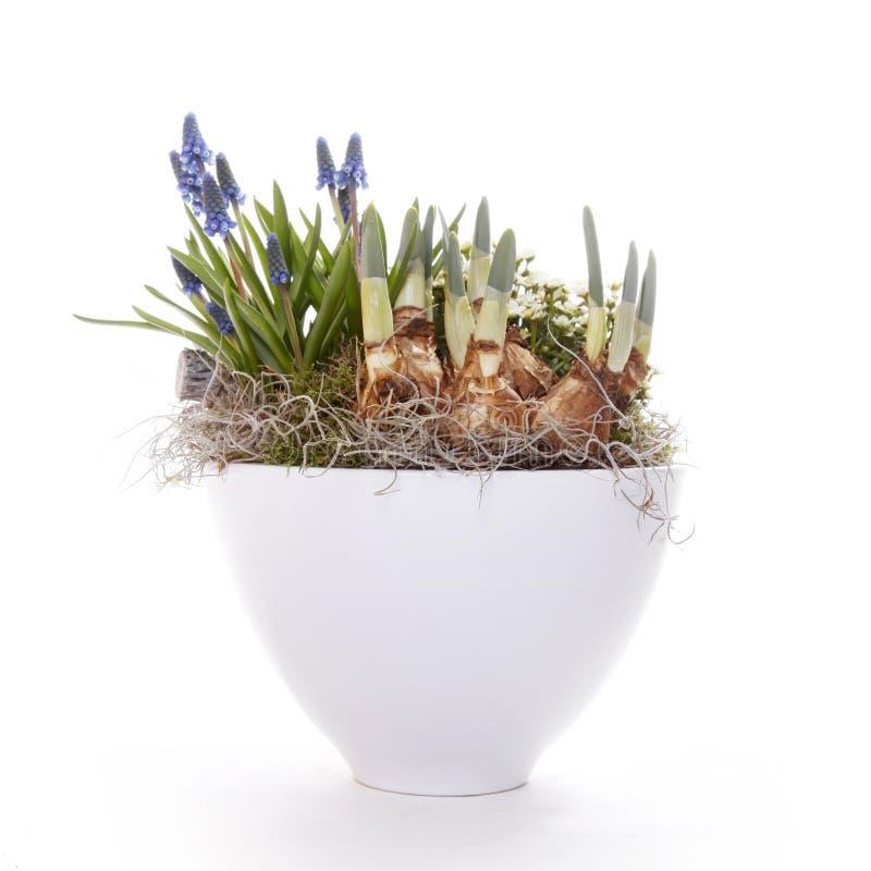 Шарики и цветки весны в баке стоковая фотография rf