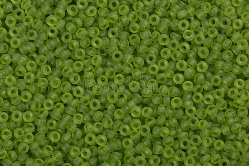 Шарики семени Olie стоковые изображения