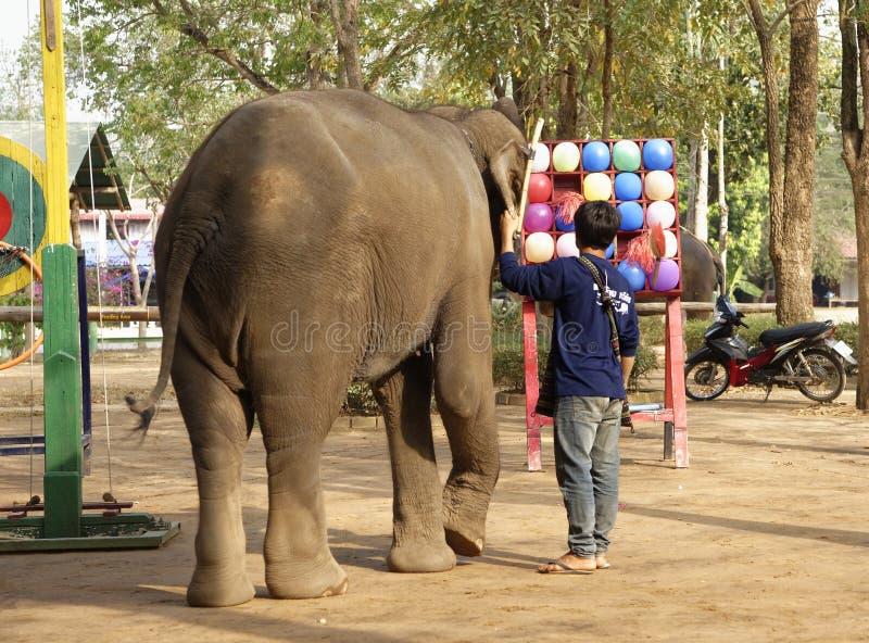 Шарик игры слона перед туристами под руководством t стоковое фото rf