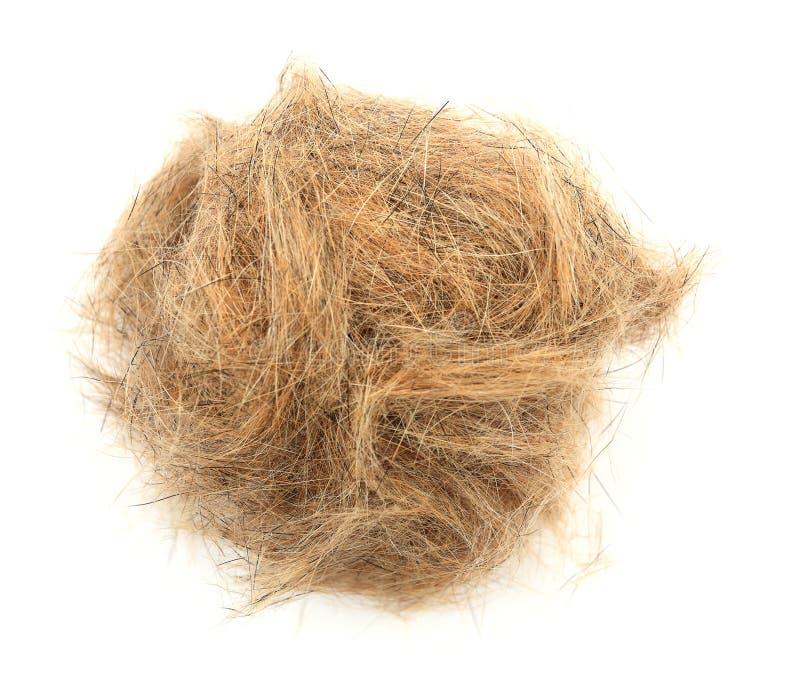 Шарик конца-вверх волос собаки стоковое изображение rf