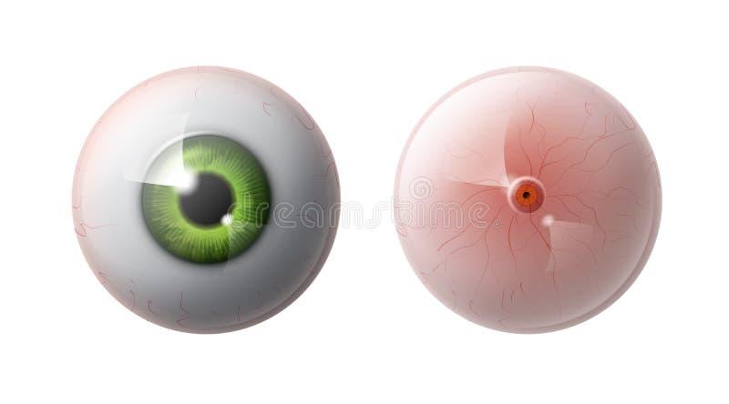 Шарик человеческого глаза иллюстрация вектора