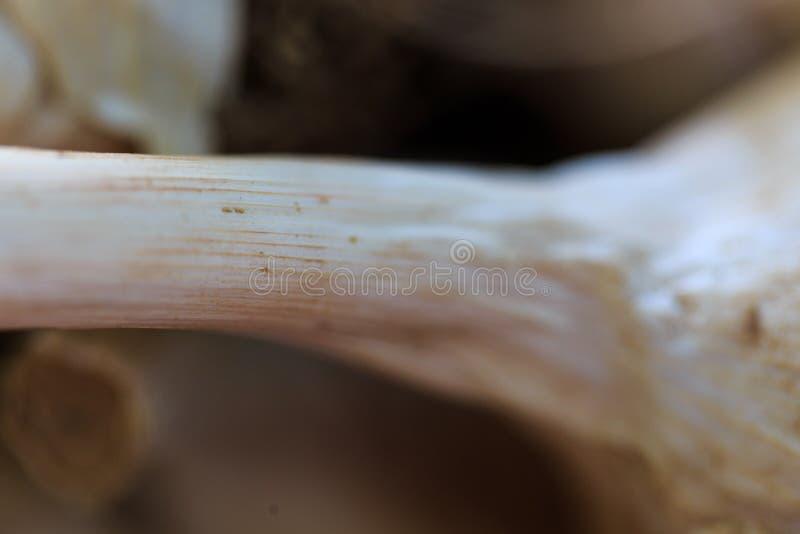 Шарик чеснока вверх закрывает на рынке ` s фермера в естественном свете стоковое изображение rf