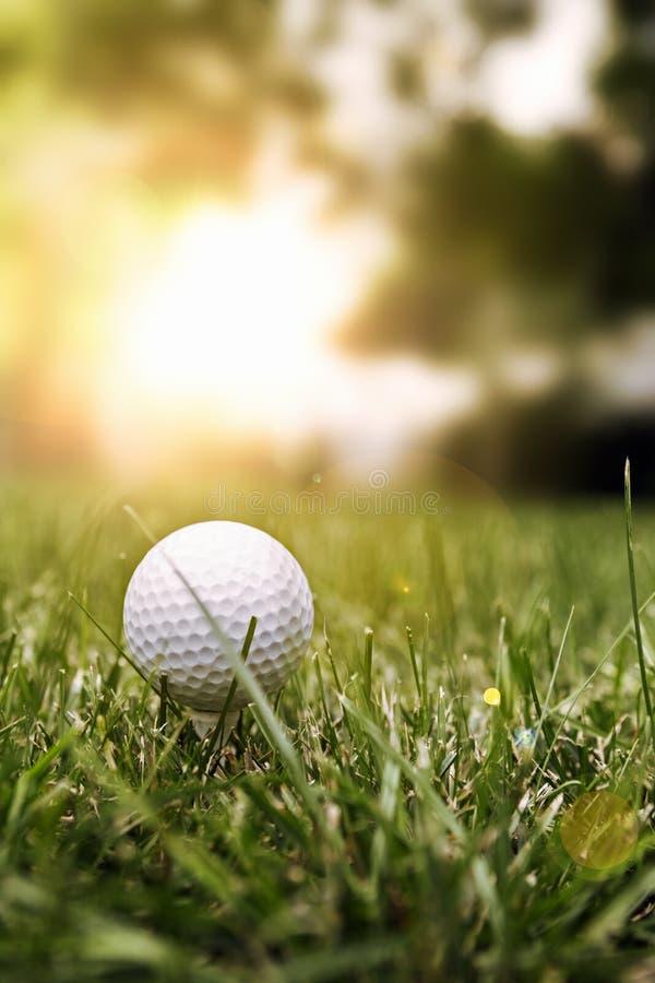 Шар для игры в гольф на зеленой траве стоковые фотографии rf