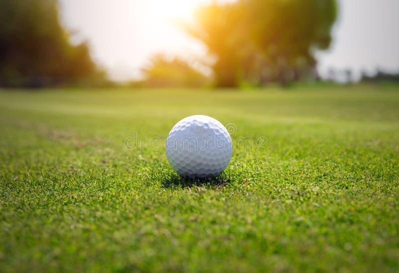 Шар для игры в гольф на поле для гольфа стоковое изображение rf
