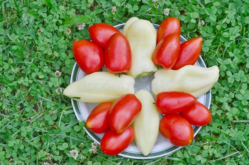 Шар овоща, южной Богемии стоковое изображение rf
