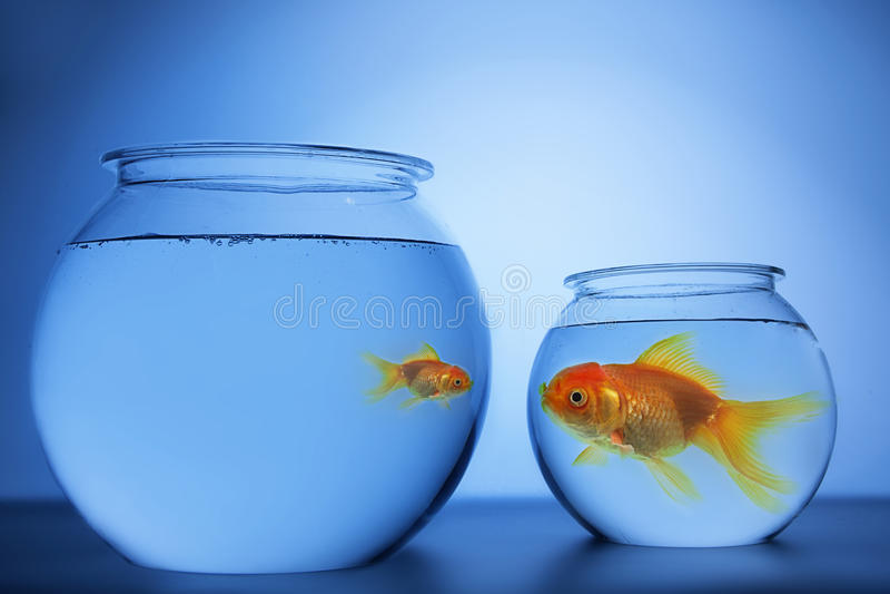 Шар рыб стоковая фотография rf