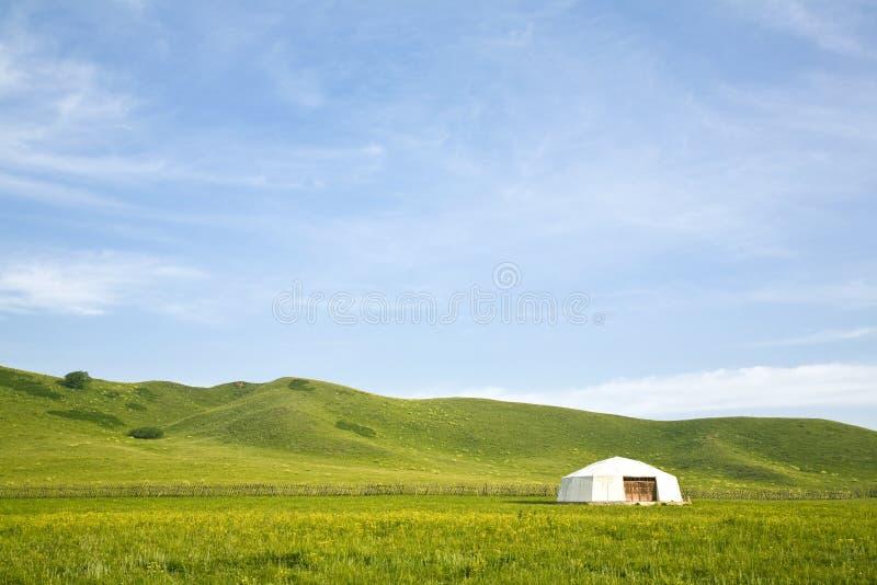 шатер злаковика стоковое изображение rf