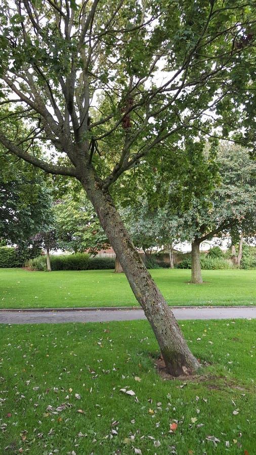 Шаткое дерево стоковое изображение