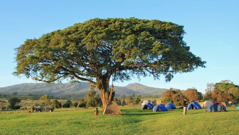 Шатры и туристы на лагере simba на Ngorongoro стоковое изображение
