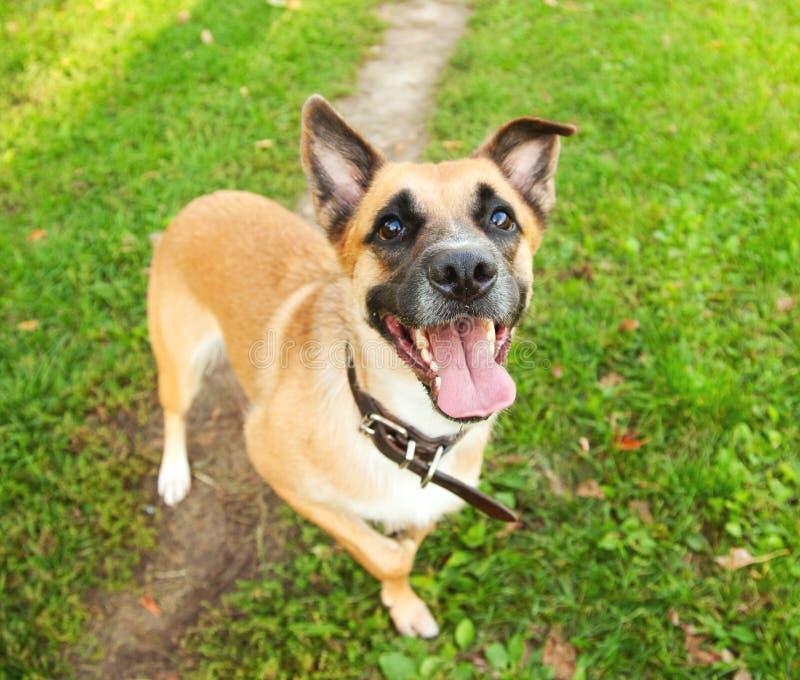 Шаловливая собака щенка на зеленой траве стоковое изображение